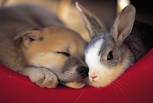 bunny_and_dog