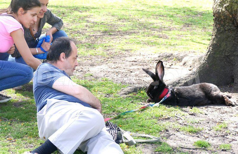 man-takes-giant-rabbit-for-stroll-in-st-jamess-park_links