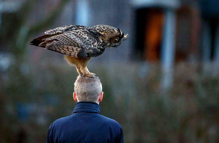 owl-lands-on-head-netherlands-noordeinde-links