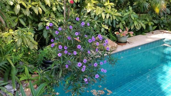 pool_flowers