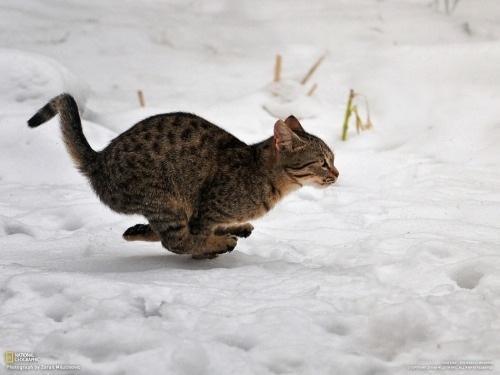 racing cat links