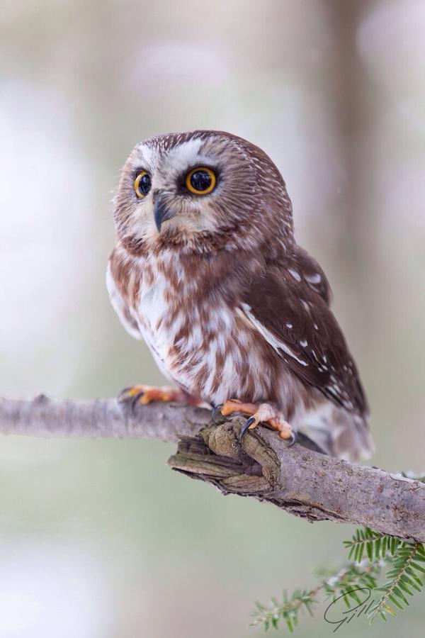 visionary owl links