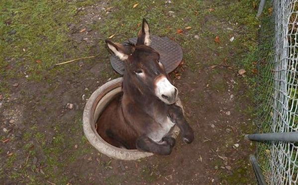 Sewer Donkey links