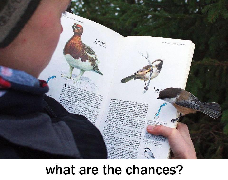 chickadee_reading_about_itself links