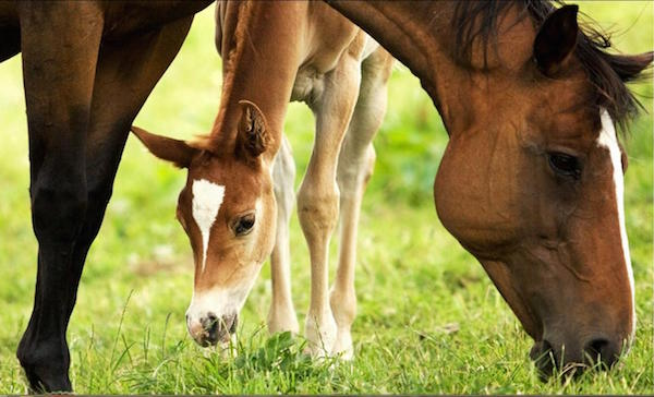 mare-of-young-foal