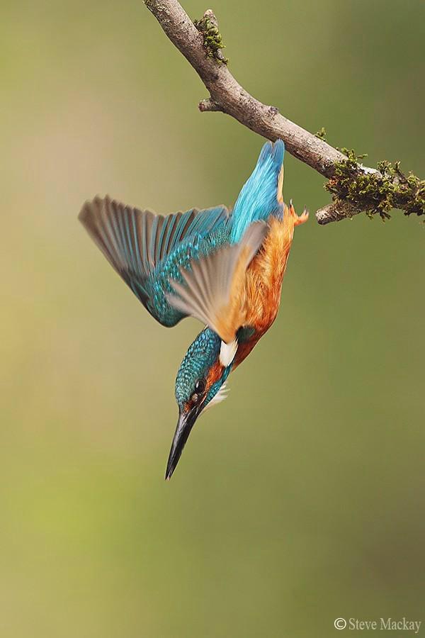 pretty bird links