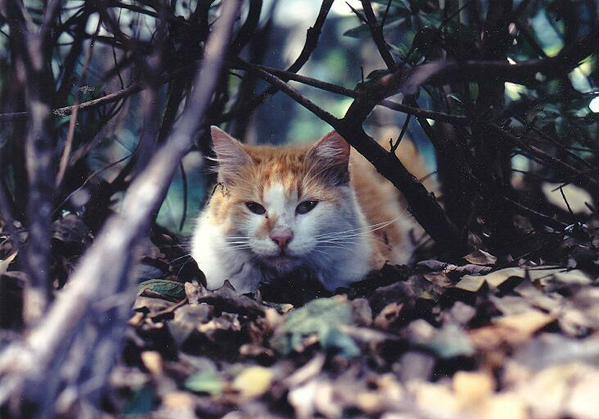 savage cat links