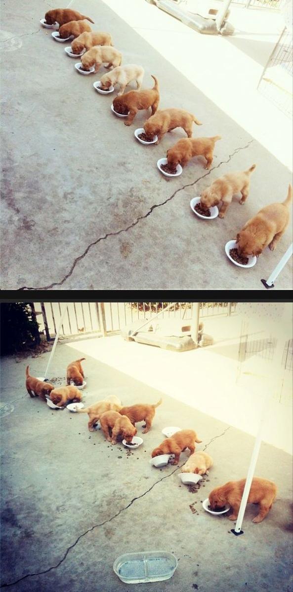 EntropicPuppies links