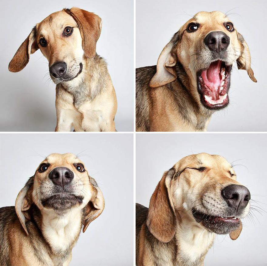 adopted-dog-teton-pitbull-humane-society-utah-15 links