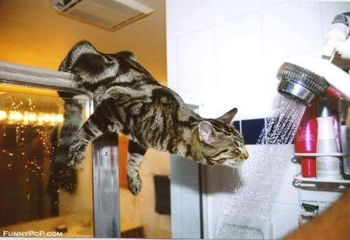 daring thirsty cat links