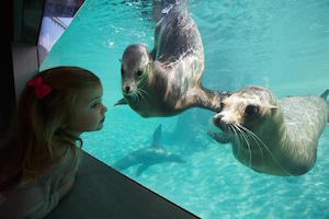 sea_lions_300