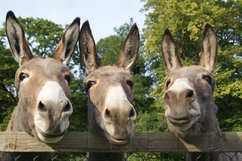 3_donkeys links