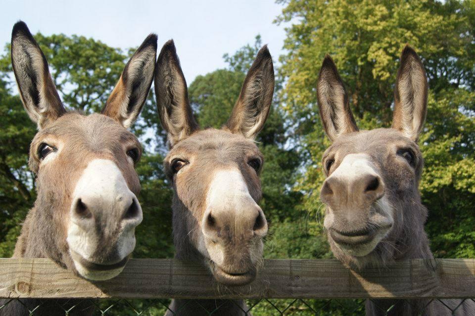 3_donkeys links
