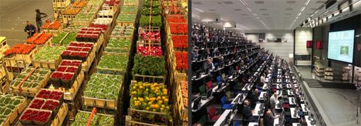 Aalsmeer-flower-market