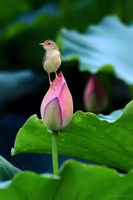 bird on bud links