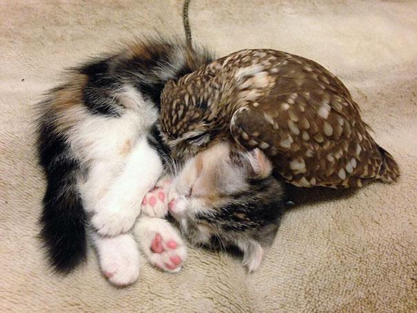 kitten-owl-best-friends-fuku-marimo-hukulou-coffee-japan-links