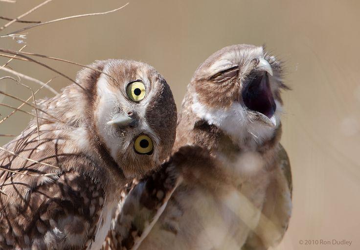 wacky owls links