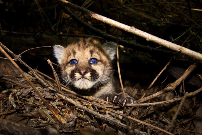 Kitten-4 links