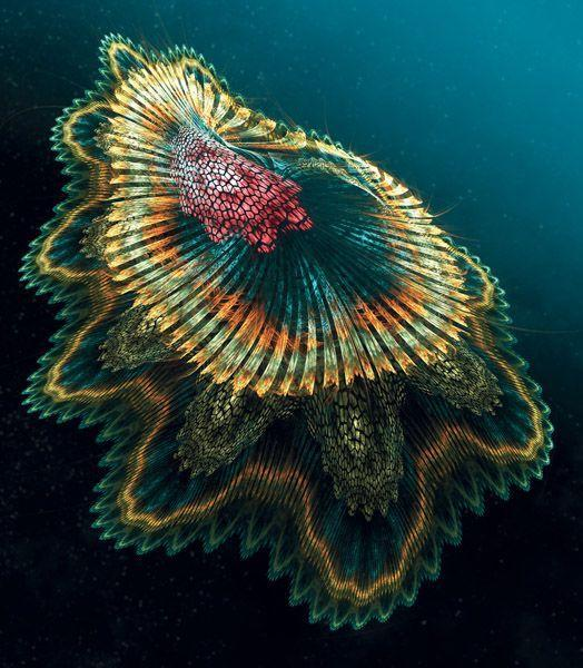 Spanish dancer jellyfish links