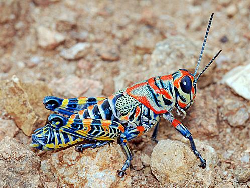 pretty grasshopper link