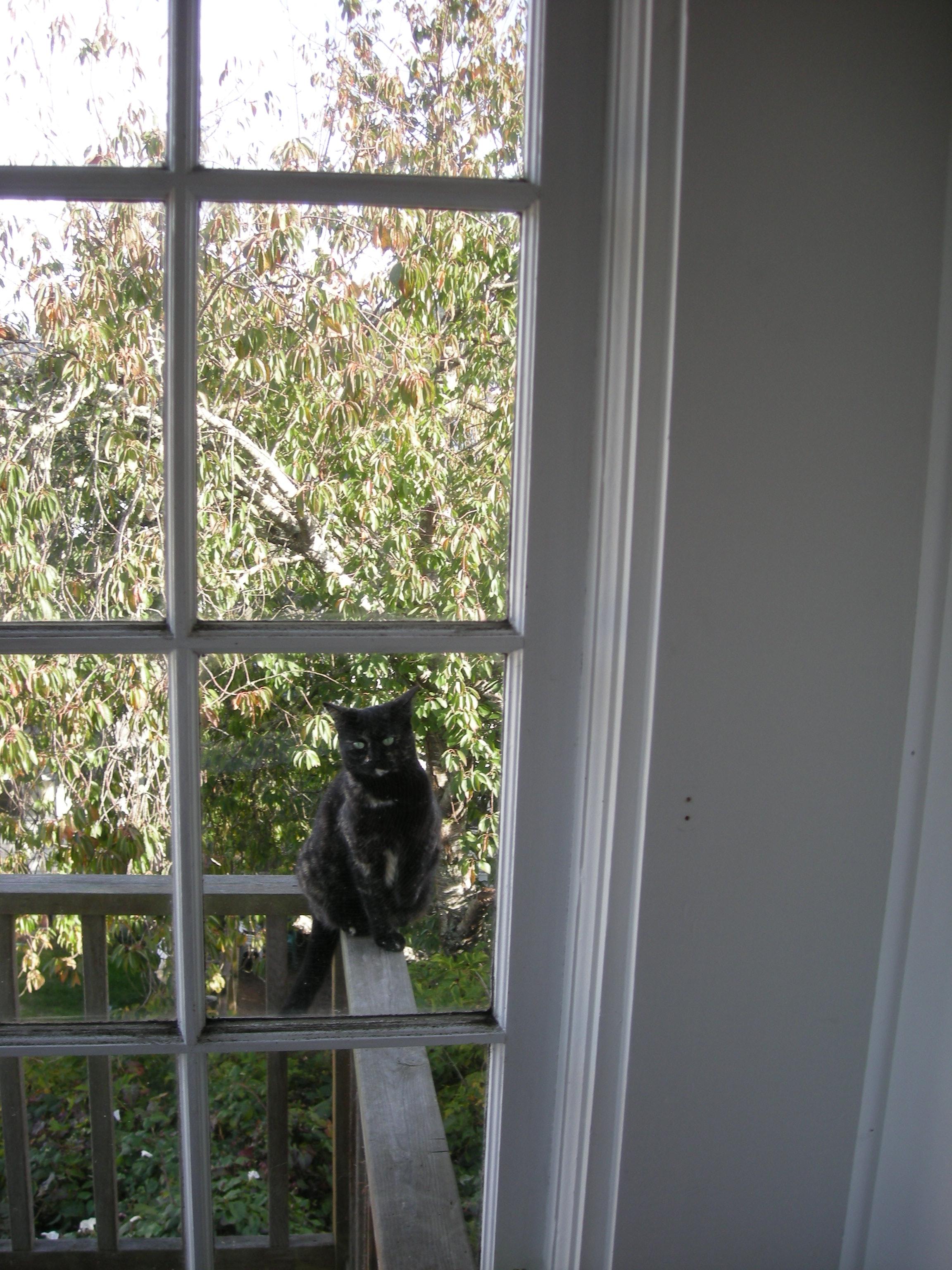 Belfie window links
