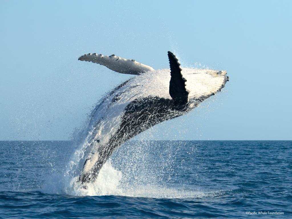 Press-Whale-4_0