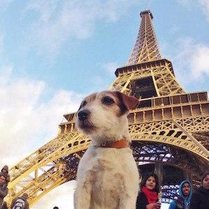 links Uggie Eiffel Tower