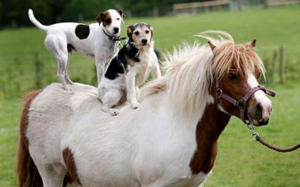 cute pony and dogs links