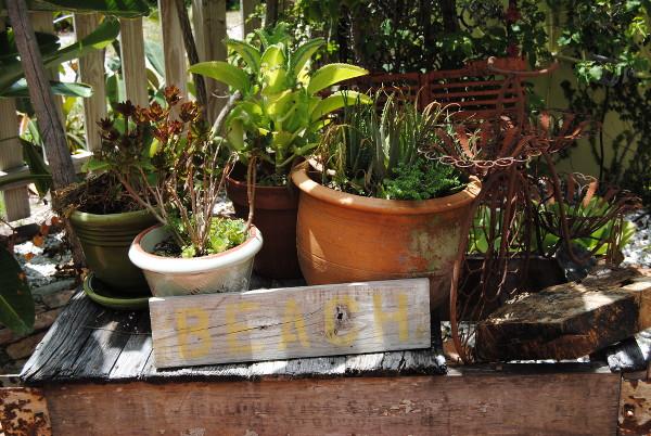 ecobean garden 026