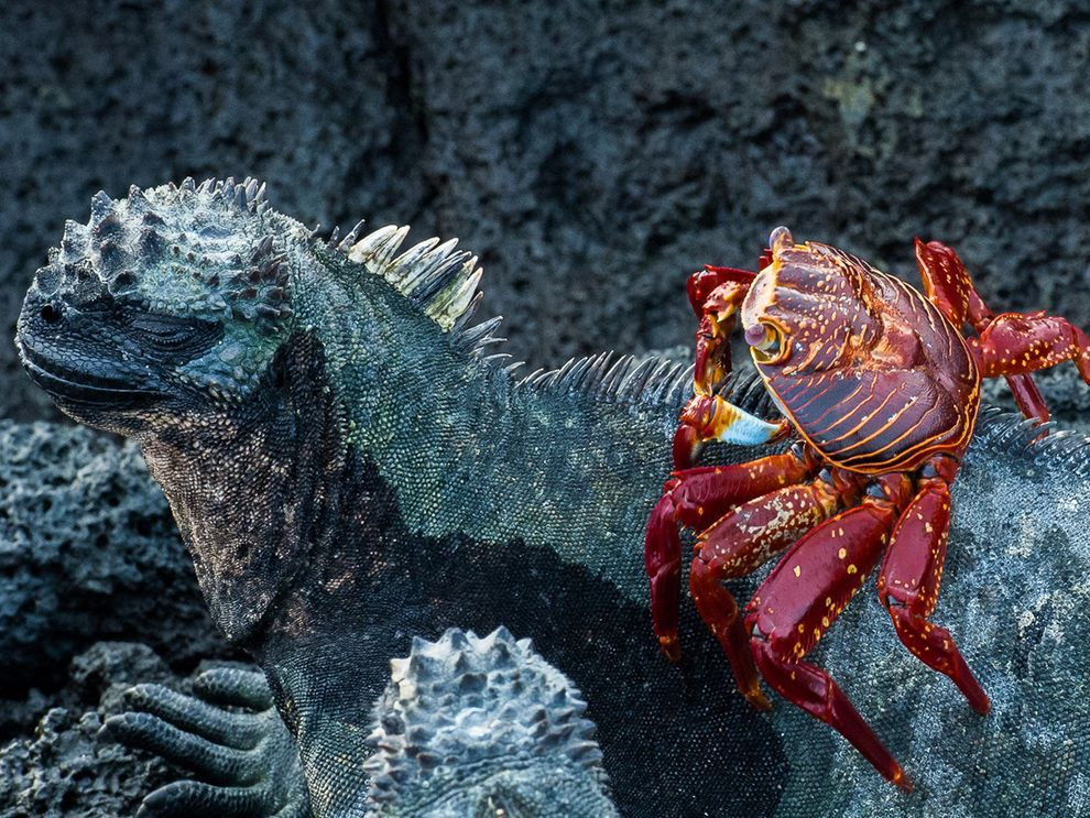 ghila monster and crab
