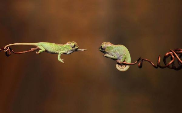 reaching lizard links
