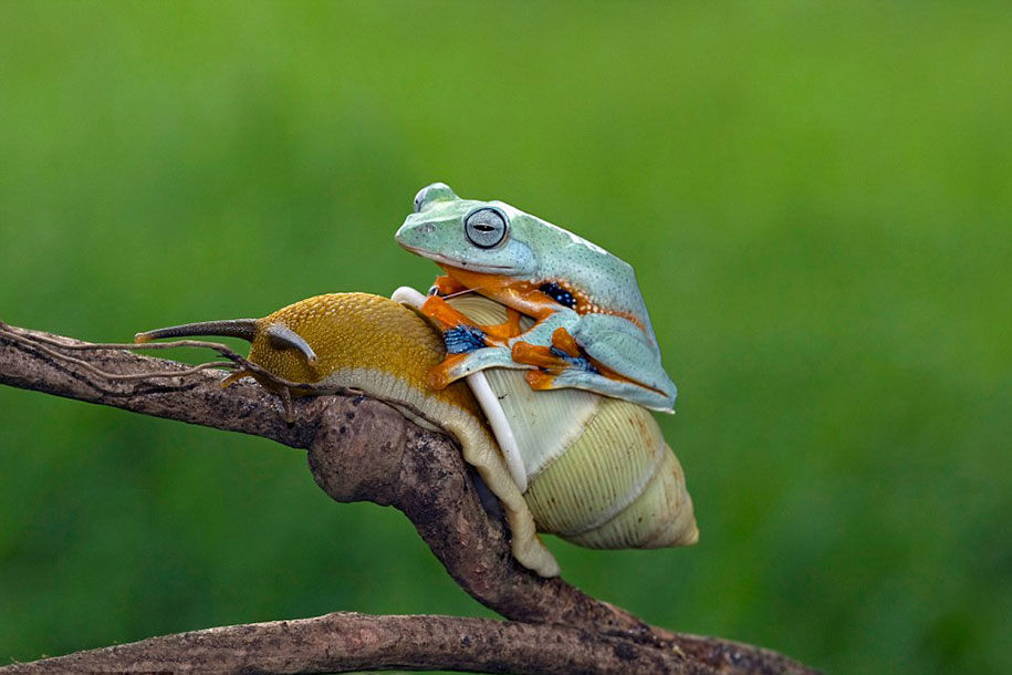 snail and frog links