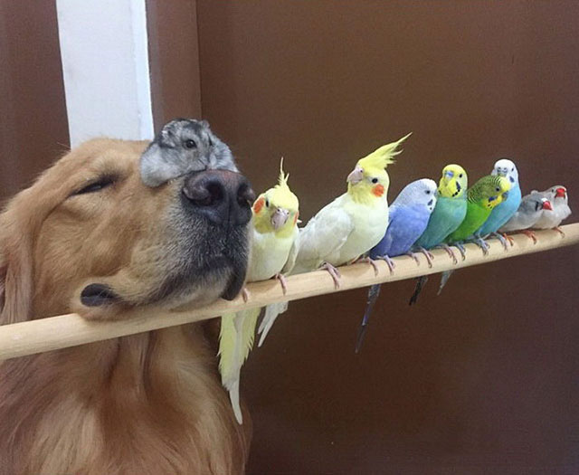 dog and birds links
