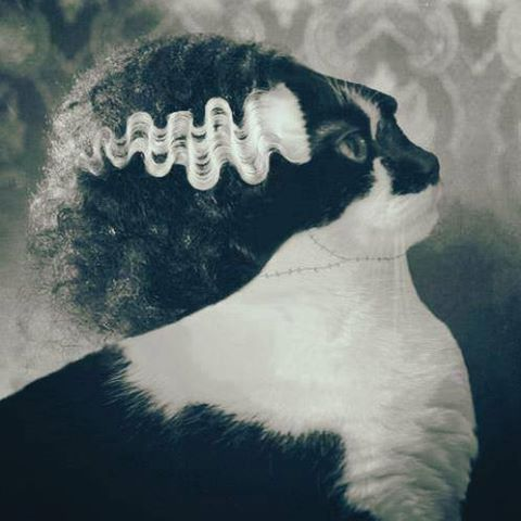 rasta halloween cat links