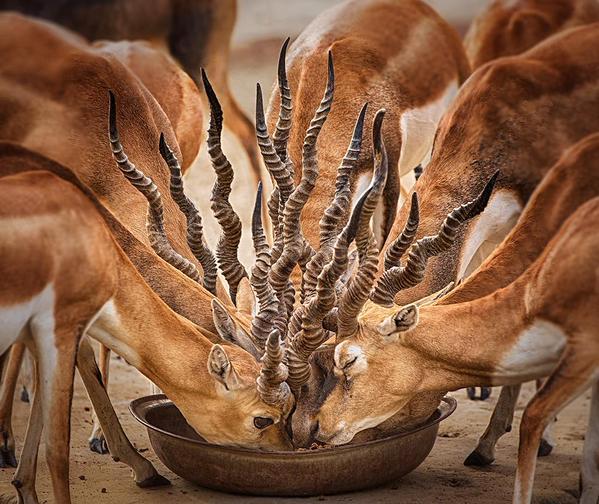 links bouquet of horns