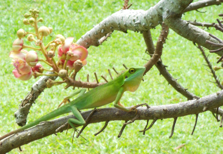pretty lizard links