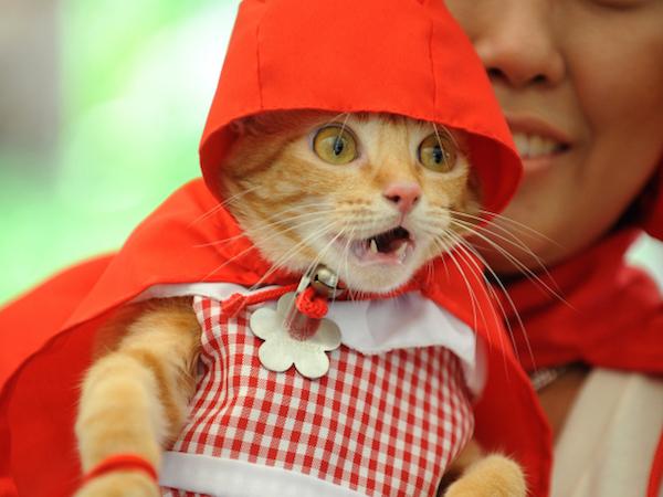 Trick-or-treat cat