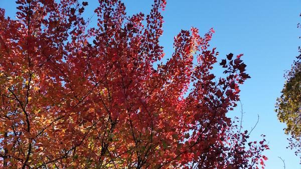 fall_foliage_2