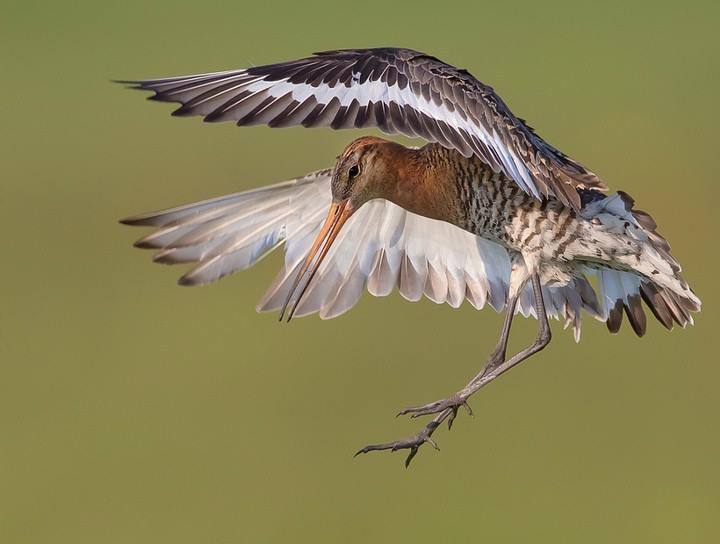 landing bird links