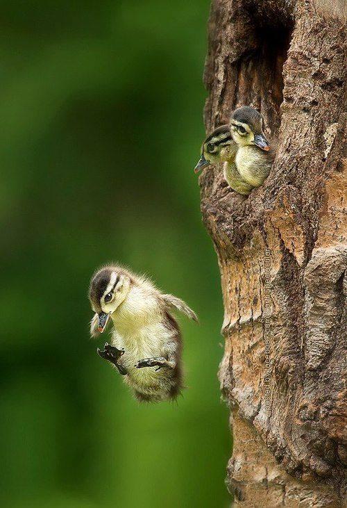two_birds_1