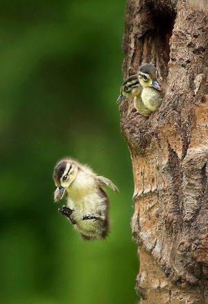 two_birds_1_300