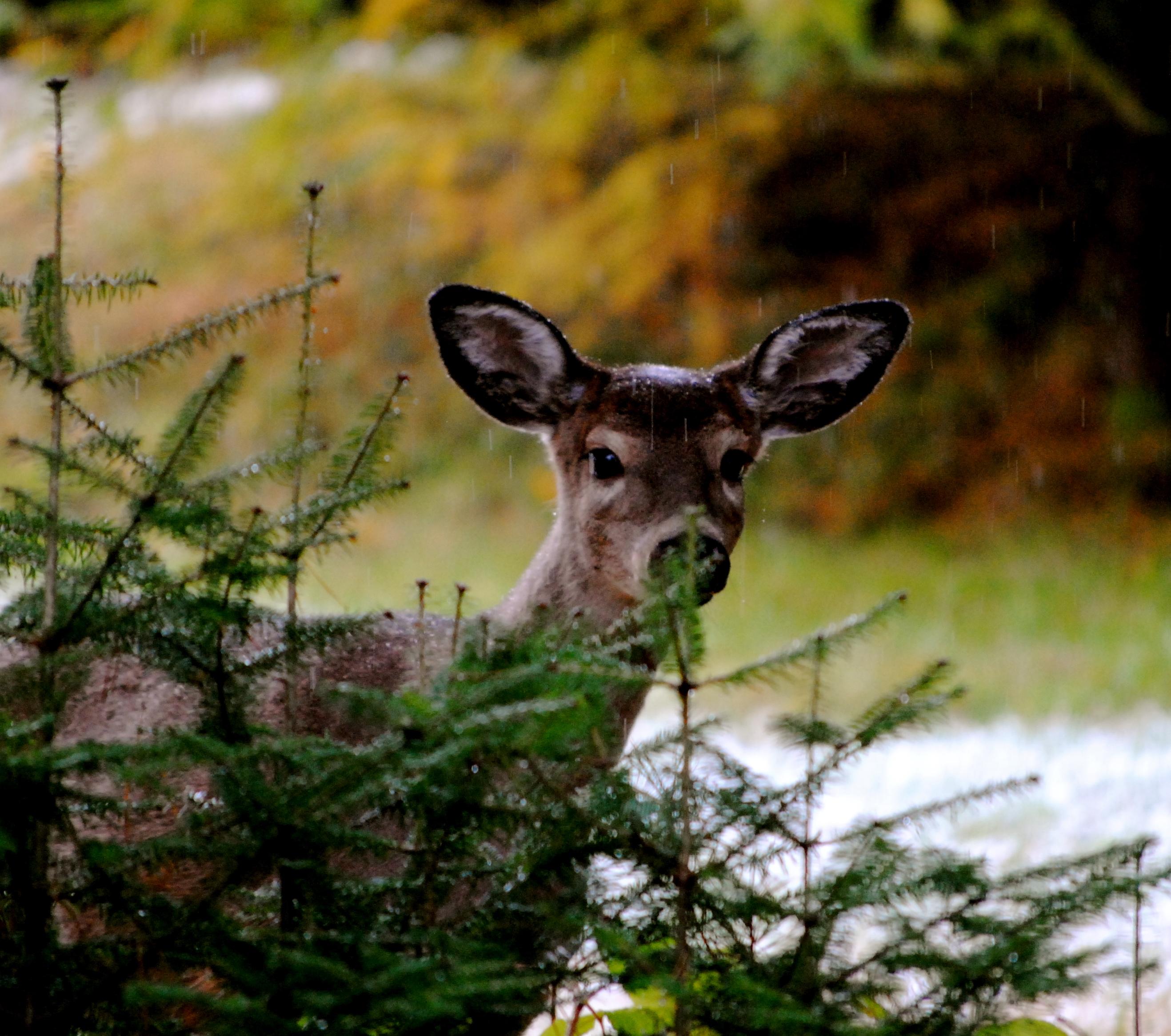deer links