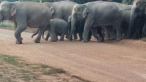 elephants_300