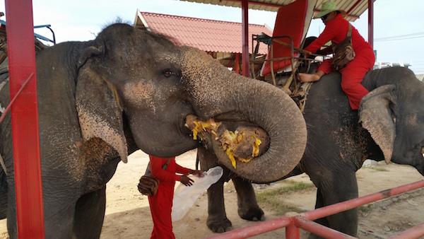 furzy links elephant