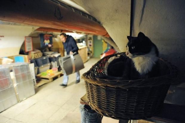 hermitage cat links
