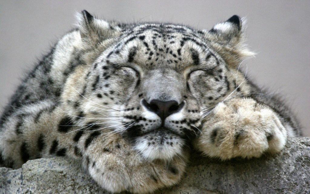 snow-leopard_1332024885