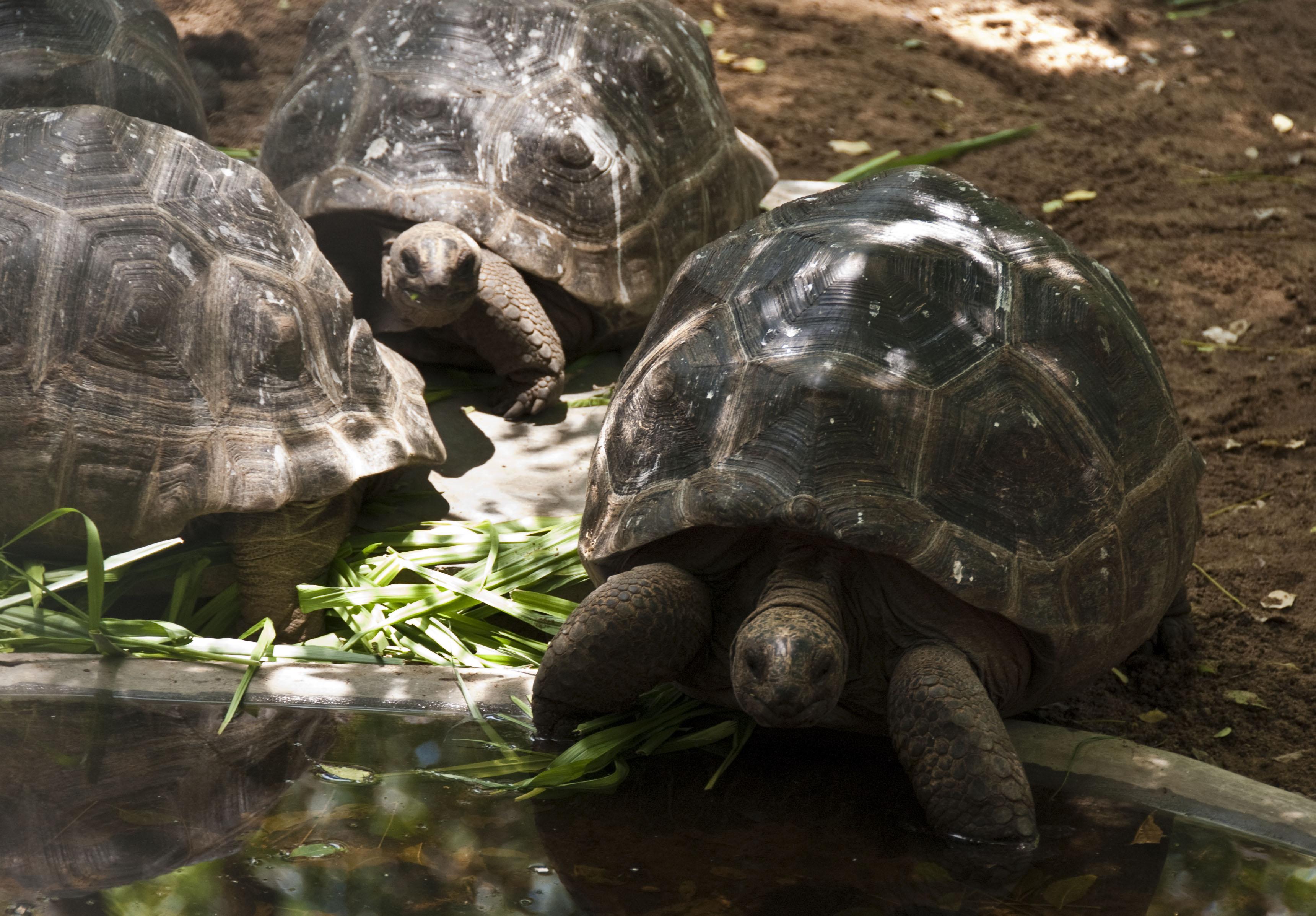 tortoises links
