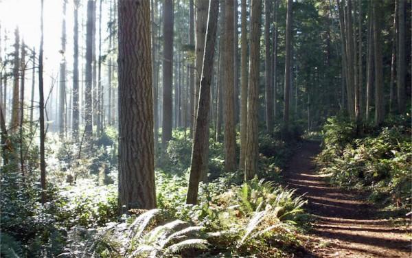 Fisher Pond Trail