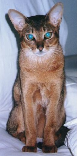 Blake who was a wonderful cat