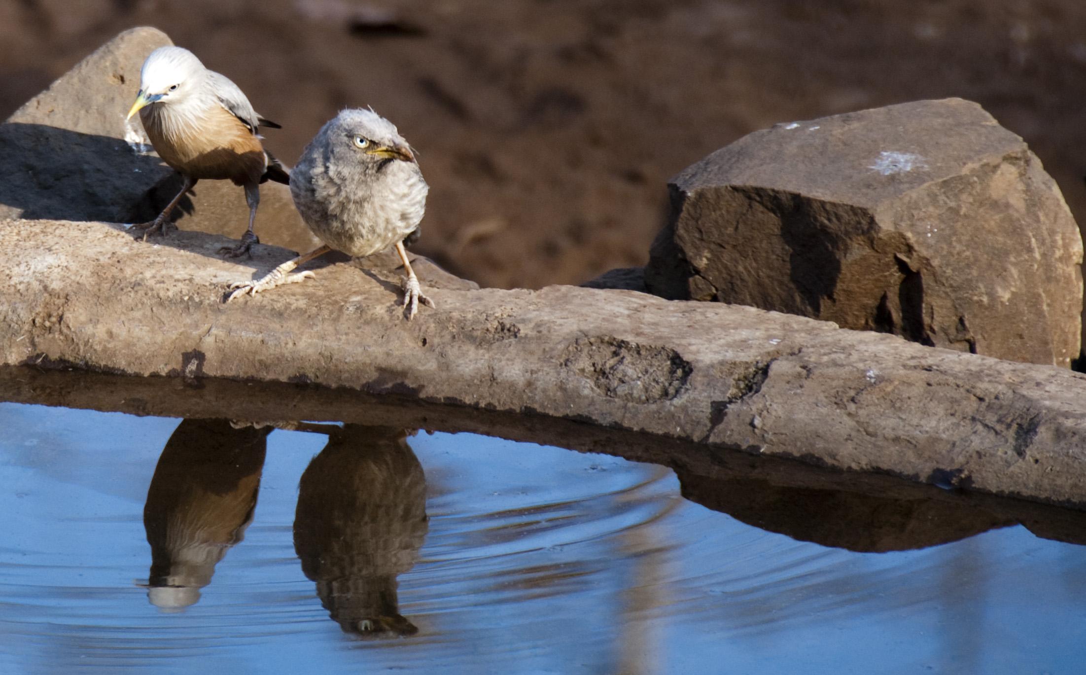 birds reflection links